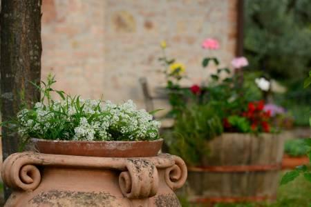 Particolare in giardino